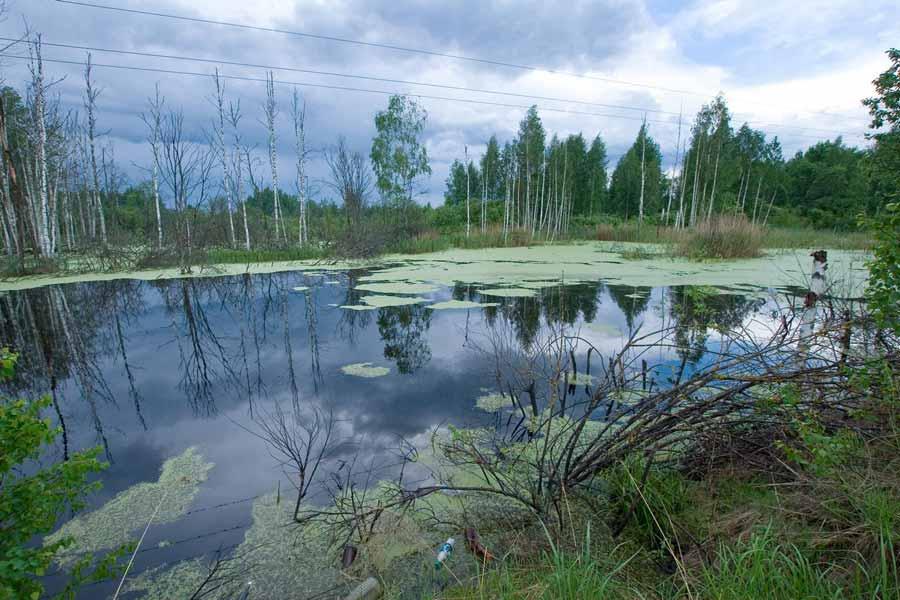 валдайские болота